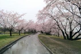 この間のグルメ王の朝の落合公園